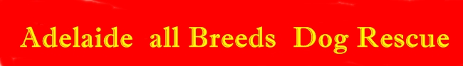 Adelaide All Breeds Dog Rescue